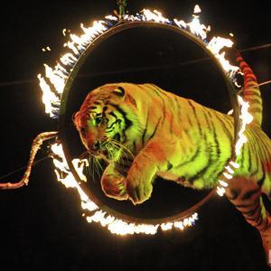 Цирки Покрова