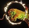Цирки в Покрове